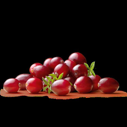 Pacific Coast Fruit Products Ltd Cranberry Pacific